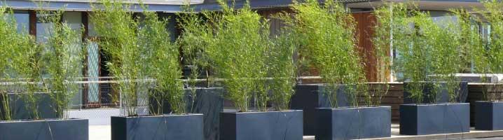 Bamboe planten kopen alle bamboe soorten online - Bamboe in bakken terras ...