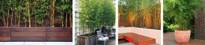 Opzoek naar bamboe voor in een pot kijk hier - Bamboe in bakken terras ...