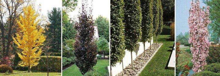 Boom In Pot Buiten.Blog Kies Jouw Boom Met Onze Bomen Keuzehulp
