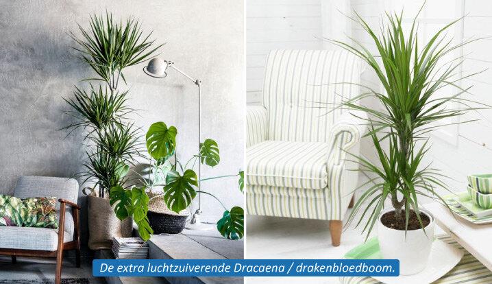 Decoratie Planten Binnen.Blog Deze Kamerplanten Wil Jij In Huis Hebben