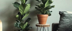 Decoratie Planten Binnen.Kamerplanten Voor In De Schaduw Tuincentrum Nl