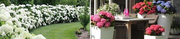 Struiken Met Bloemen Voor In De Tuin.Blog 10 Bloeiende Vaste Planten Voor Een Kleurrijke Tuin