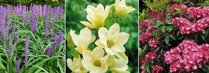 Witte Vaste Planten.Blog 10 Bloeiende Vaste Planten Voor Een Kleurrijke Tuin