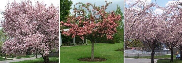 Kleine Bomen Voor In De Tuin.Blog Kies Jouw Boom Met Onze Bomen Keuzehulp