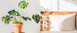 Decoratie Planten Binnen.Alle Makkelijke Kamerplanten Op Een Rijtje Tuincentrum Nl