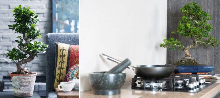 Blog Eerste Hulp Bij Bonsai Verzorgen