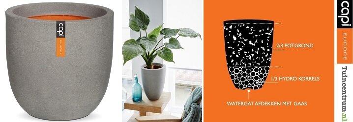 Blog Plant En Plantenbak De Juiste Match In 4 Stappen