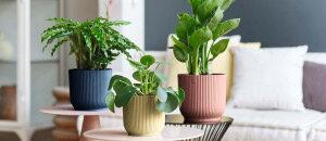 4 combinaties van planten en plantenbakken voor binnen