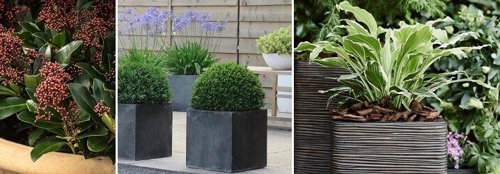 Vaste Planten Voor Plantenbakken Buiten.Blog Plant En Plantenbak De Juiste Match In 4 Stappen