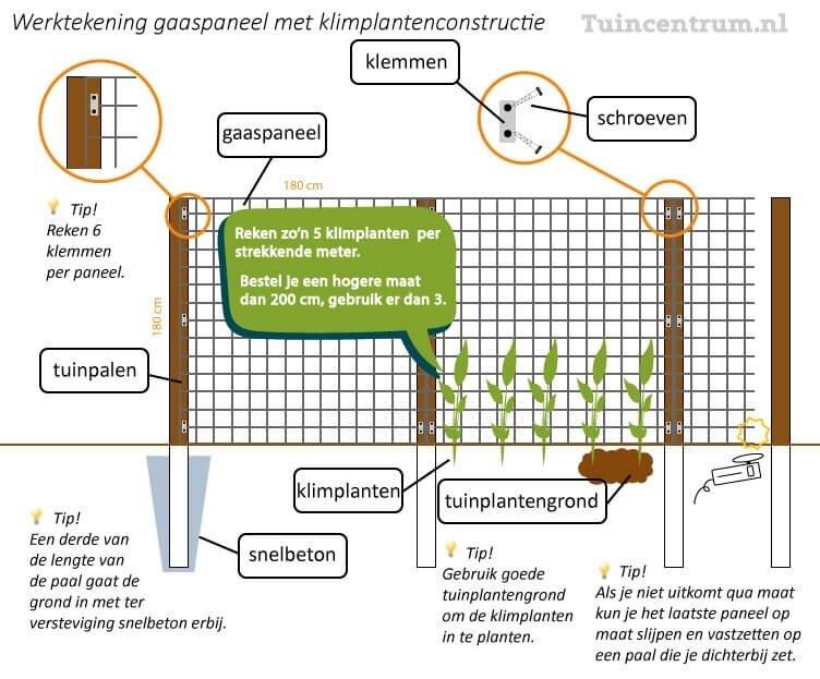 Aantal klimplanten per meter