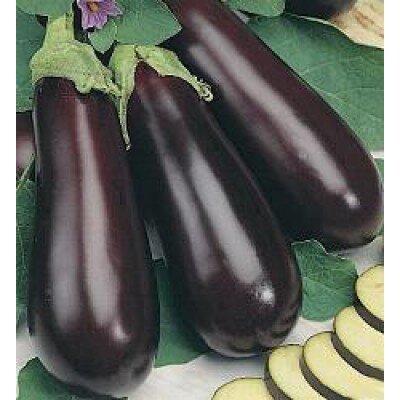 Buzzy ® Aubergine Halflange Violette