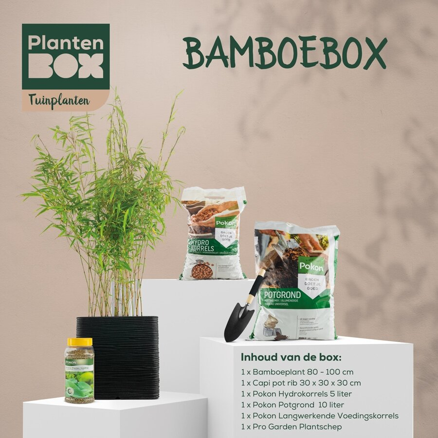 Bamboebox