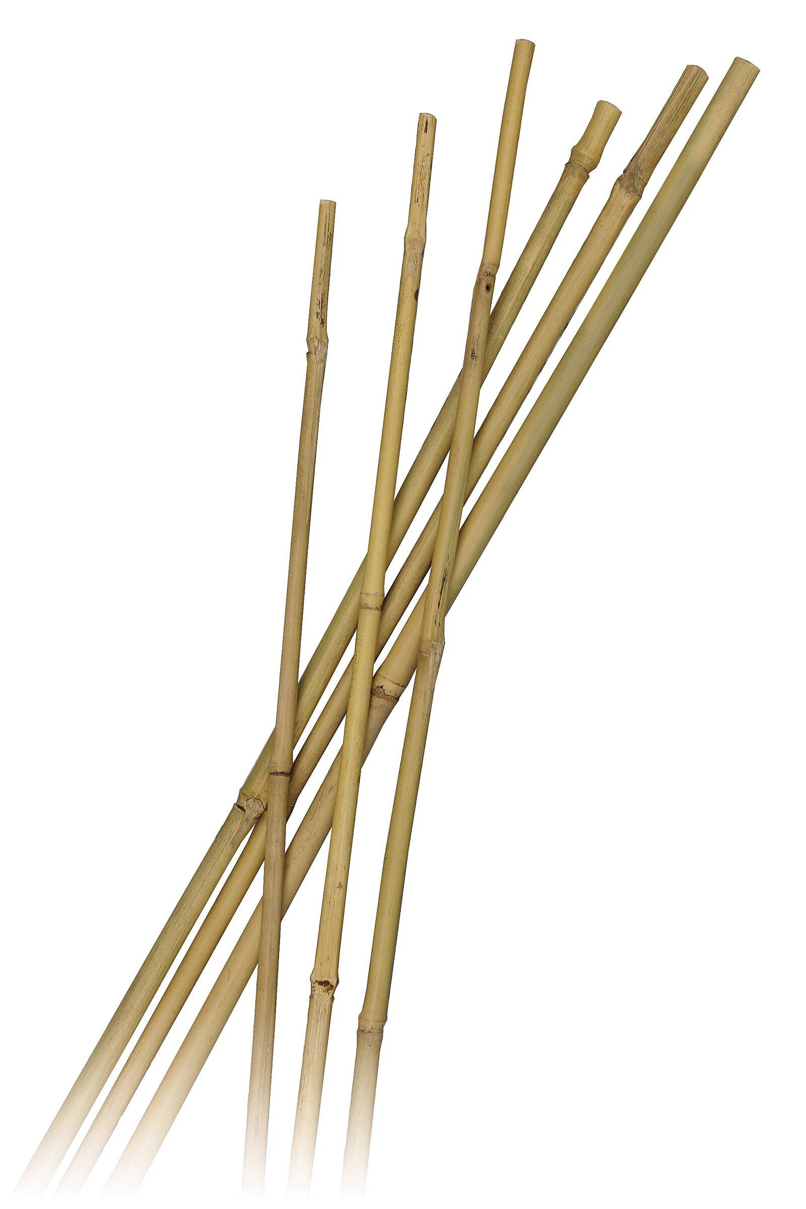 Bamboestokken kopen for Boeddhabeelden intratuin
