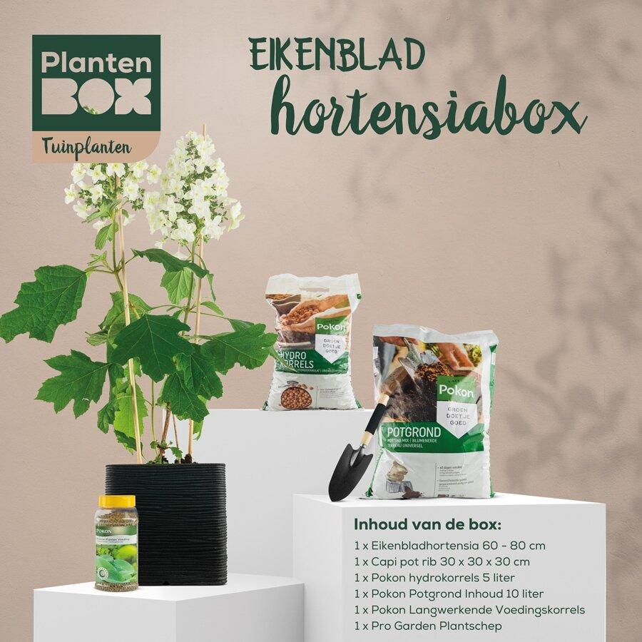Eikenblad hortensiabox