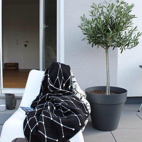 Elho loft urban rond antraciet met olijfboom