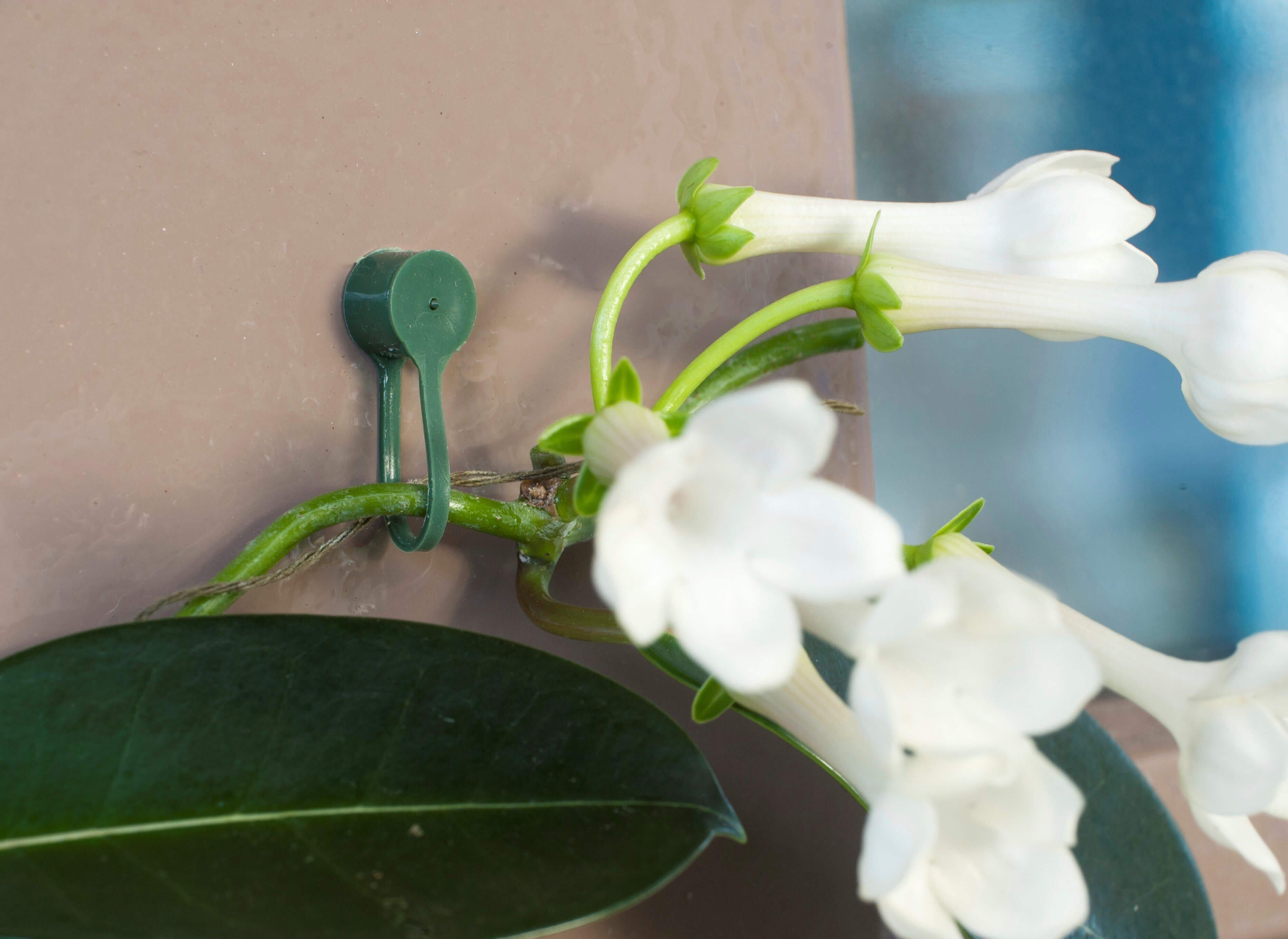 Gebruik Nature plantenklemmen groen