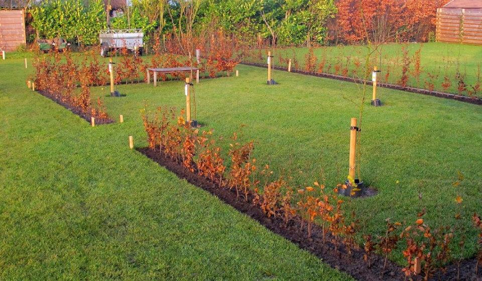 Groene beukenhaag fagus sylvatica kopen tuincentrum