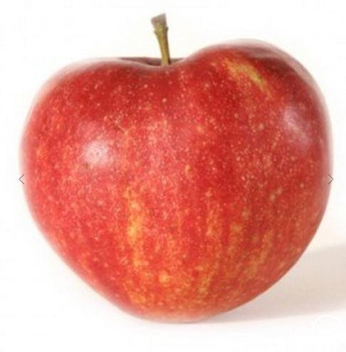 Appelboom 'Jonagold' laagstam (zelfbestuivend)
