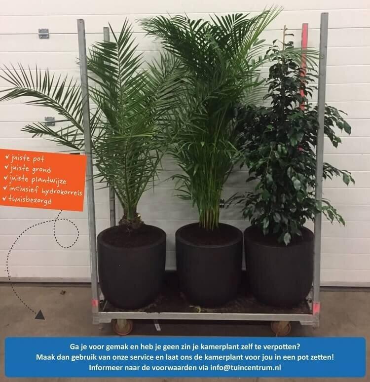 Kamerplanten in pot