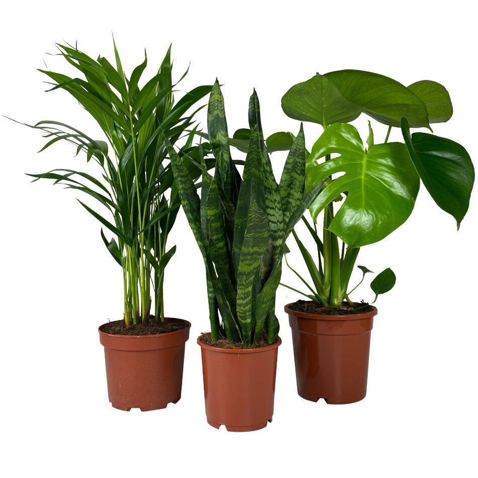 Tuincentrum-Kamerplanten set Urban Jungle-aanbieding