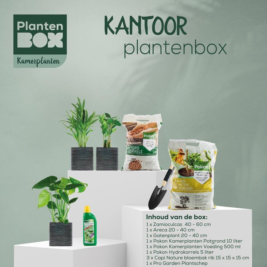 Kantoorplantenbox