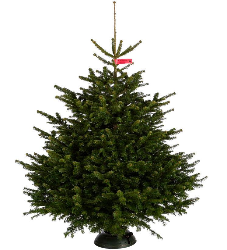 Nordmann Kerstboom Deluxe Kopen Tuincentrum Nl