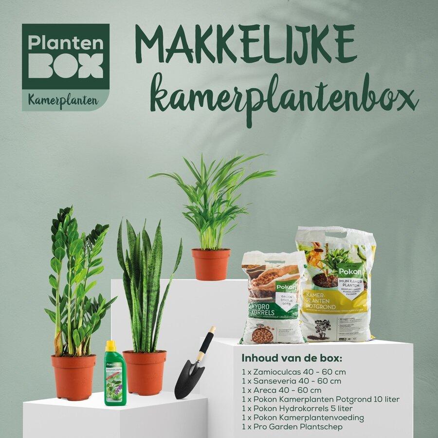 Makkelijke kamerplantenbox