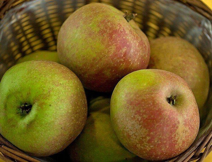 Appelboom 'Schone van Boskoop' halfstam
