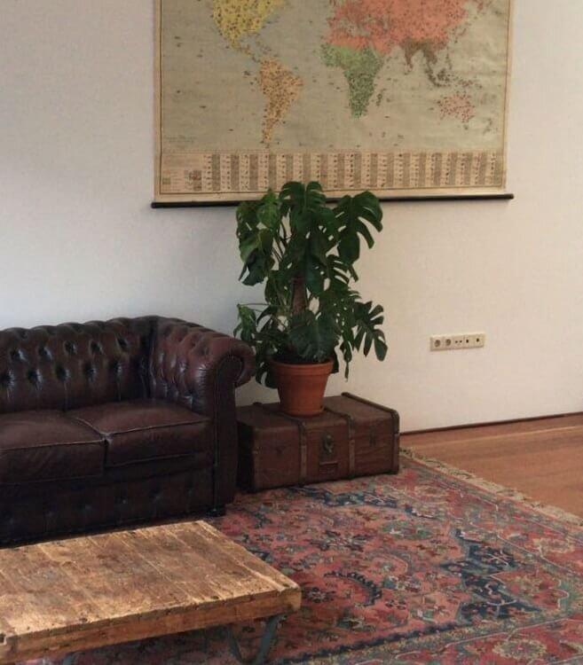 Philodendron monstera deliciosa (gatenplant) maat 20-40 cm