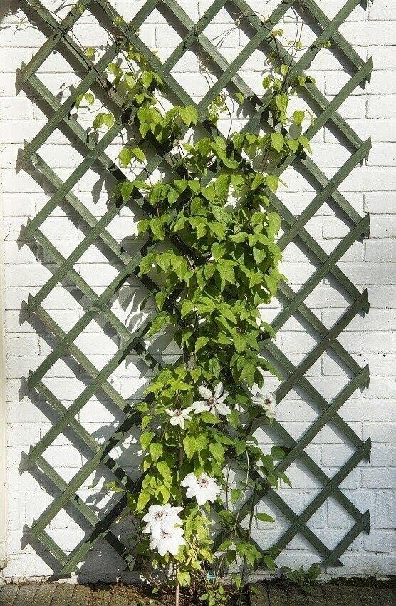Klimrek Voor Planten.Nature Klimrek Fsc Hout Groen Kopen Tuincentrum Nl