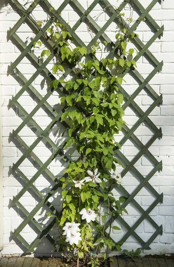 Nature klimrek FSC hout groen met clematis