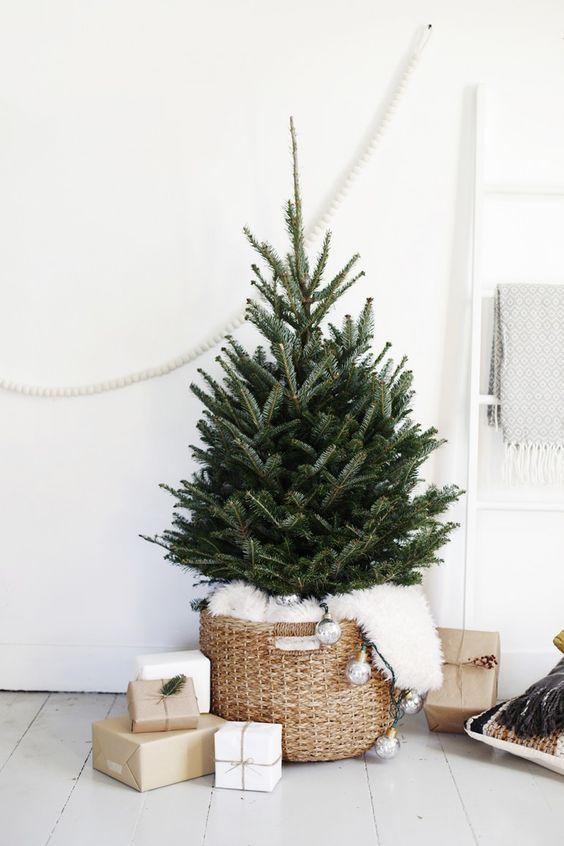 Nordmann kerstboom in mand
