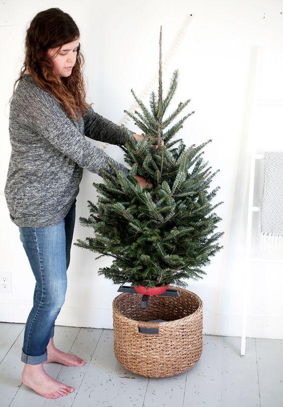 Nordmann kerstboom gezaagd