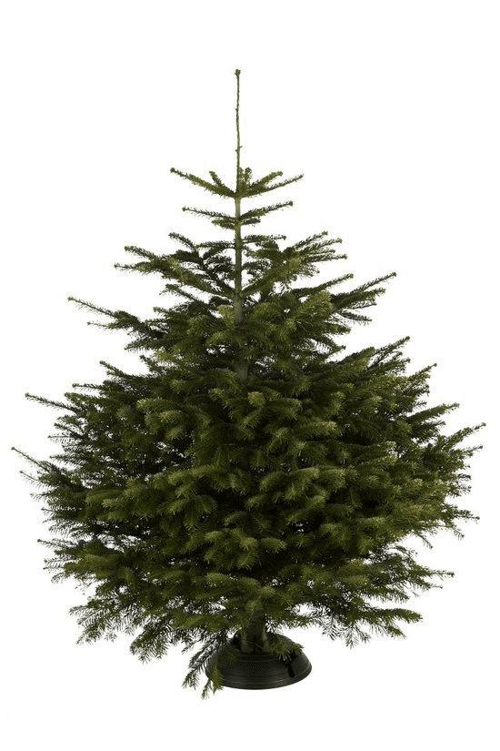 Kerstboom standaard