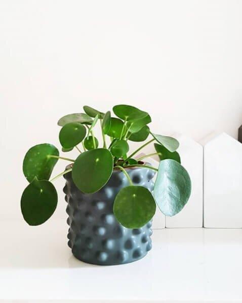 Pannenkoekplant (pilea peperomioides baby) in pot