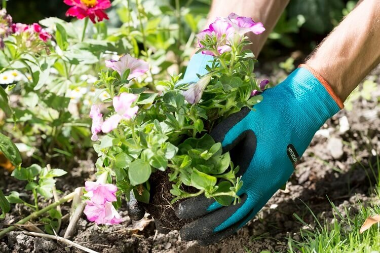 Planten met Gardena plant- en bodemhandschoenen