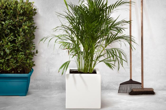 Planter Smooth wit vierkant (50 x 50 x 50 cm)