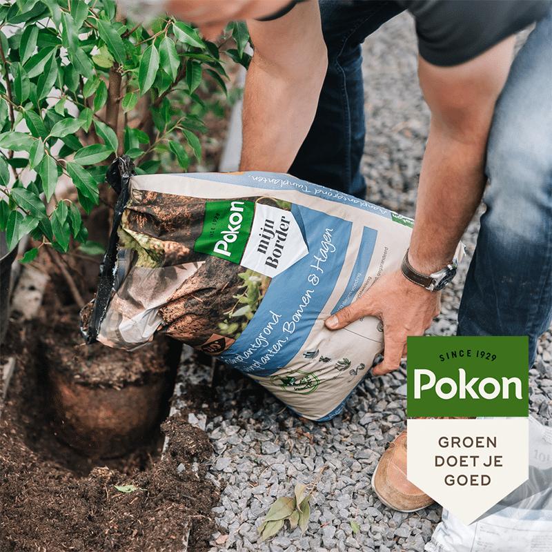 Pokon aanplantgrond voor planten, hagen & bomen