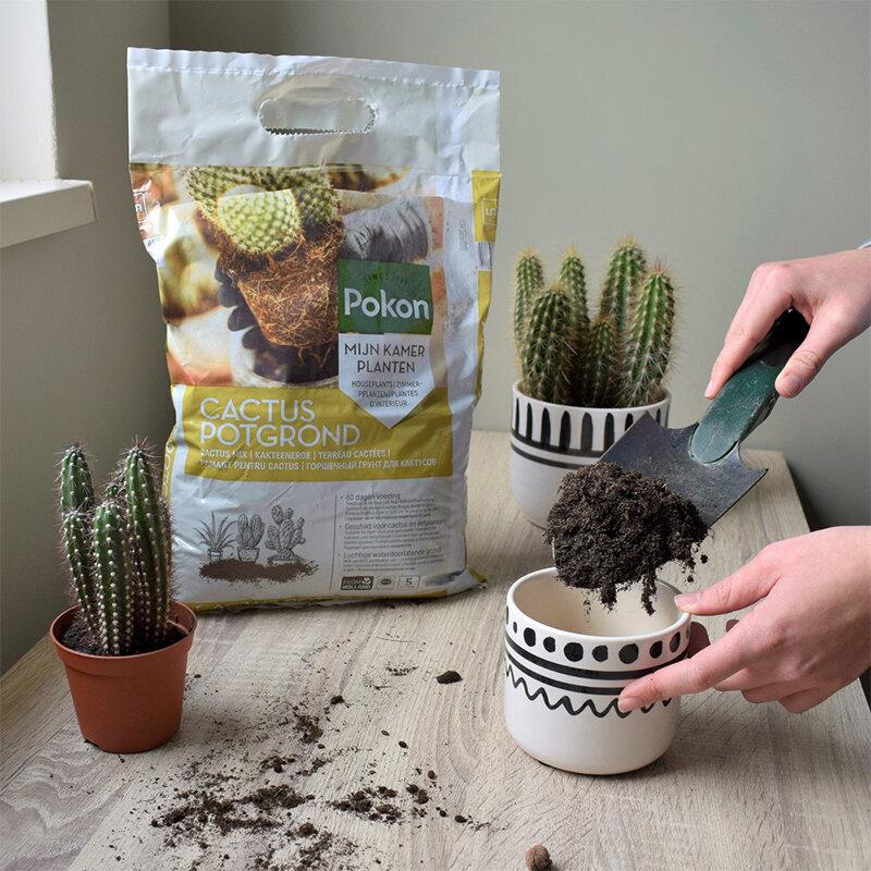 Pokon Cactus Grond