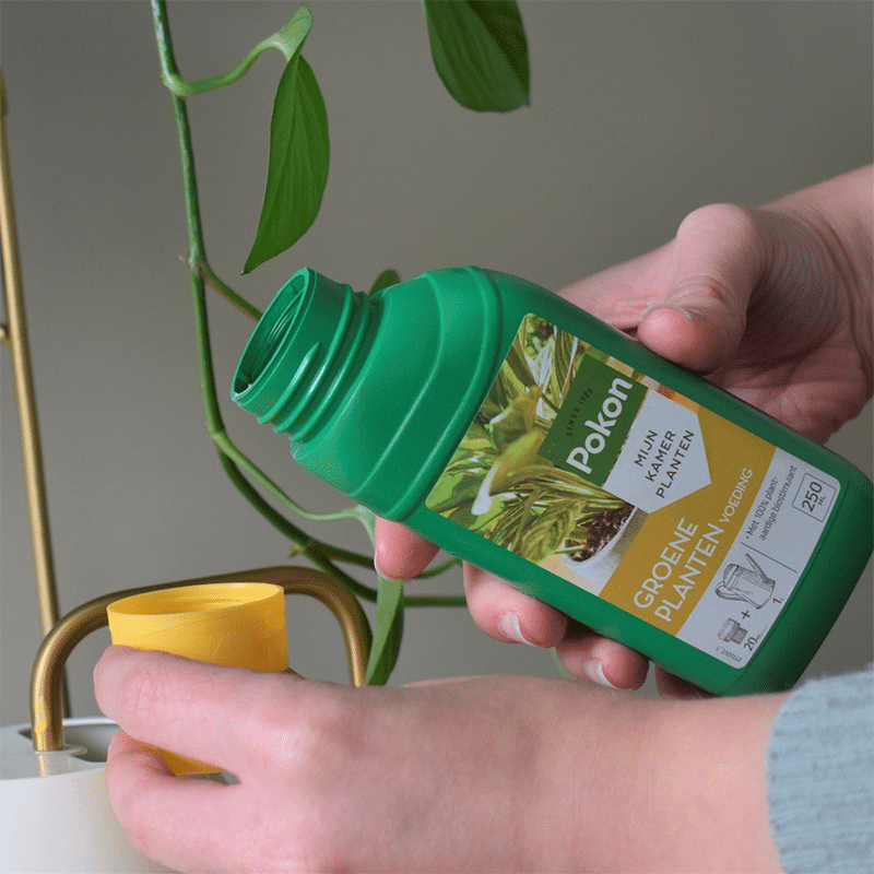 Pokon Groene Planten Voeding Vloeibaar